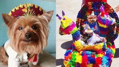 El amor incondicional por las mascotas la llevó a diseñar una línea de ropa y accesorios muy mexicana
