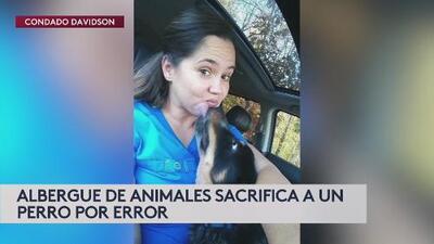 Aplican eutanasia al perro de una pareja por error