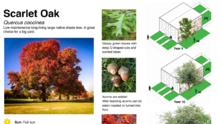 Filadelfia está regalando 1,000 árboles: aquí se explica cómo obtener y plantar uno