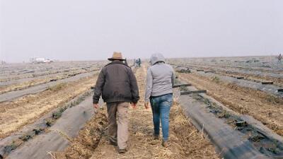 """""""Se benefician de su ignorancia"""": los campesinos de California trabajan sin parar a pesar del peligro por los incendios"""