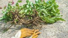 Recomendaciones para minimizar el riesgo de alergias a la hora de quitar plantas de su jardín