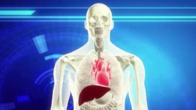 Alerta en Florida por contagio de la bacteria 'Vibrio Vulnificus'