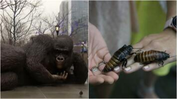La escultura gigante de un gorila y nombrar una cucaracha como a un ser querido, lo más buscado en NY