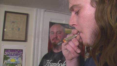 Personas que usan mariguana regularmente, necesitarían más anestesia en procedimientos
