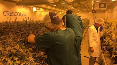 Así se ve un centro de producción legal de marihuana en Illinois