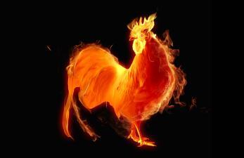 Descubre lo que nos espera en el año del Gallo de Fuego