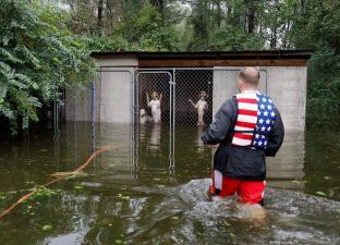 Las tristes fotos de perros abandonados en jaulas en plena inundación y otros animales que sufren por Florence