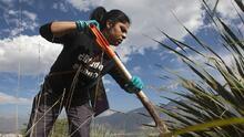 El Patrocinio, la fosa clandestina más grande de México