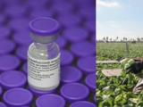 Talleres informativos sobre la vacuna contra Covid-19 para trabajadores agrícolas del Valle Central