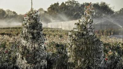 Ola de frío deja a Florida con temperaturas más bajas que Alaska