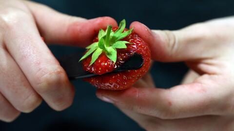 WIC promueve el consumo de frutas y verduras, aprovechando los beneficios del programa