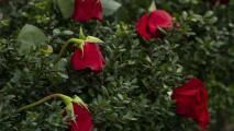 Realizan decenas de eventos a nivel nacional para conmemorar a los fallecidos por coronavirus