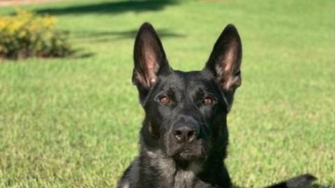 Un perro policía muere durante tiroteo en centro comercial cercano a West Palm Beach
