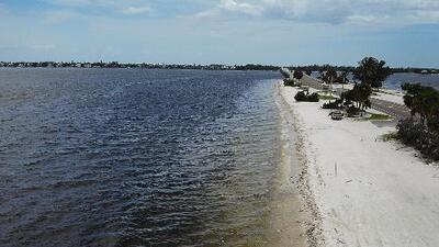 Playas vacías y toneladas de especies marinas muertas: los efectos de la marea roja en Florida