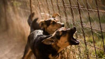 Sentencian a tres años en prisión a dueño de perros que atacaron a niño