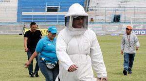 Suspenden partido de fútbol en Ecuador por ataque de abejas