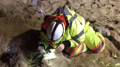 Los fósiles prehistóricos descubiertos en las obras de expansión del metro en Los Ángeles