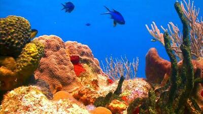 Arrecifes de coral: ¿en qué le ayudan al planeta y cómo intentan evitar su desaparición?