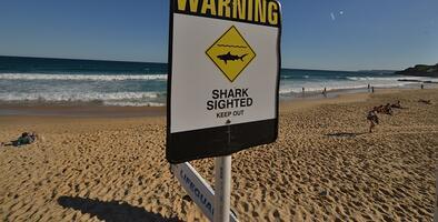 Una pareja fue a surfear y un tiburón agarró a la mujer: el esposo lo golpeó hasta que la liberó