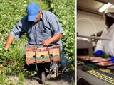 Carolina del Norte continúa vacunación del Grupo 3, incluidos los trabajadores del campo y plantas de alimentos