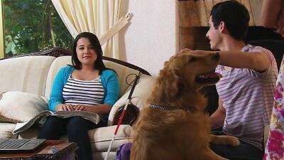 Un joven y su perro le cambiaron la vida a una muchacha invidente