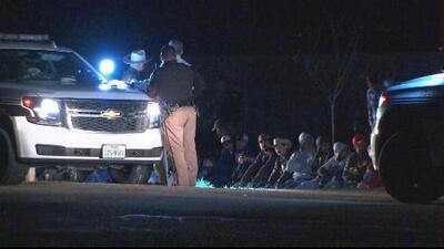 Rescatan 165 gallos y arrestan a 50 personas en un evento de peleas clandestinas en Texas