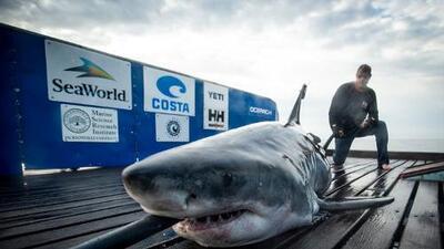 Tiburón blanco de 10 pies es rastreado en la costa de Jersey Shore, y podría quedarse para el resto del fin de semana