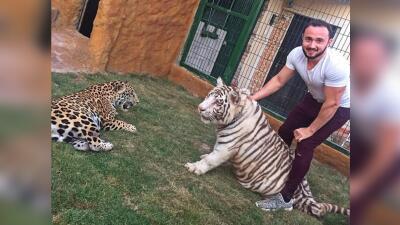 Un  tigre y un jaguar: las mascotas de Beto Sierra