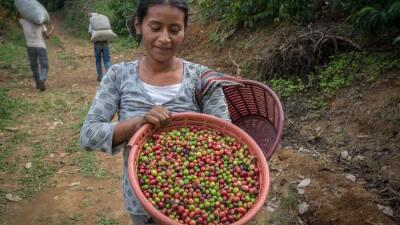 As climate changes, Mexico struggles to keep coffee industry abuzz
