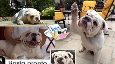"""Sansón, el perro de """"Porque El Amor Manda"""", falleció"""