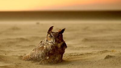 En fotos: los animales también buscan escapar de los devastadores incendios en California