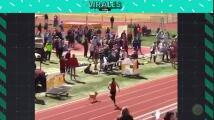 Un perro humilla a todos los atletas en la prueba de velocidad