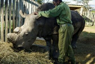 Un rinoceronte con guardaespaldas