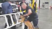 Oficial de la unidad canina enfrenta cargos por ordenar a su perro morder a una mujer