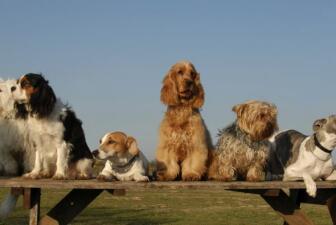 Razas de perros que viven más años