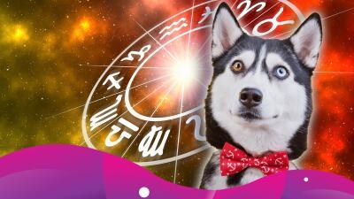 ¿Cómo es tu perro según su signo zodiacal?