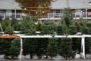 La demanda de árboles de navidad en Bakersfield comenzó temprano y con fuerza
