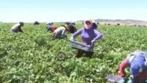 Reactivan programa de asistencia financiera para campesinos afectados por el coronavirus en California