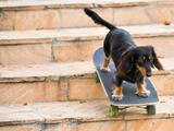 Kern busca voluntarios para dar refugio temporal a perros en sus albergues