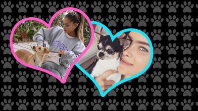 Pure Love sienten los famosos por su mascotas