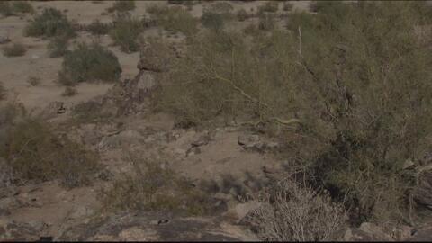 Autoridades confirman casos de rabia en Superstition Mountains al este de Phoenix