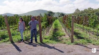 Los retos que enfrentan los propietarios mexicanos de un viñedo en el Valle de Napa a raíz de las políticas migratorias del presidente Trump