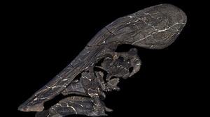 Era herbívoro y con una enorme cresta: paleontólogos identifican una nueva especie de dinosaurio en México