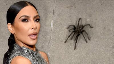 Kim Kardashian pasa un susto al encontrar una tarántula en su garaje y esto fue lo que pasó