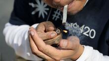 ¿La legalización de la marihuana recreativa en México reducirá la violencia de los carteles?