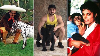 EN FOTOS: Las mascotas más raras de los famosos