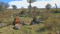 Ganado muere en Chile a causa de severa sequía