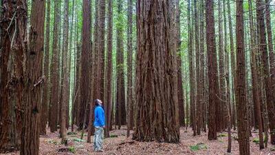 Árboles en lugar de tumbas: esta compañía de Silicon Valley busca reinventar los cementerios de EEUU