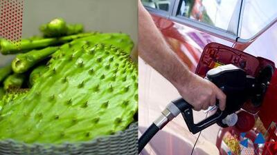 Una empresa mexicana está produciendo combustible del nopal