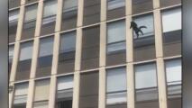 ¿El gato volador? Felino salta del quinto piso de un edificio en llamas en Chicago y es captado en video